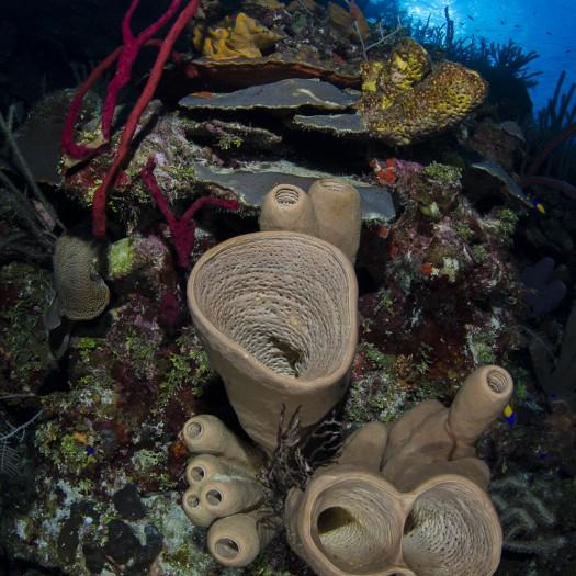 cayman reef wall-1